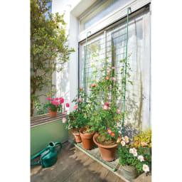 アイアンフラワーカーテン〈セージグリーン〉 フラワーカーテン 品種ごとに性質が異なるバラは1品種ずつ鉢植えに。複数の鉢を置いて誘引すれば華やぎます。