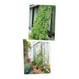 アイアンフラワーカーテン〈セージグリーン〉 フラワーカーテン 夏にはゴーヤを絡めて日除けに!