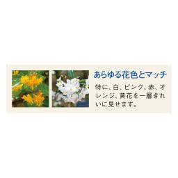 プランター台付ワイド&スーパーハイローズトレリス 2枚
