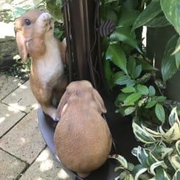 森の動物オーナメントシリーズ たれ耳うさぎのポスト