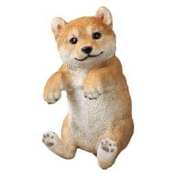 ひっかけ子犬 (ア)柴犬