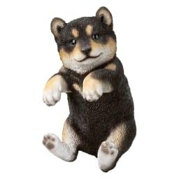ひっかけ子犬 (イ)黒柴 肉球にもご注目。