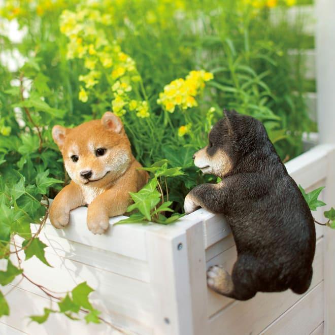 ひっかけ子犬 左から(ア)柴犬 (イ)黒柴
