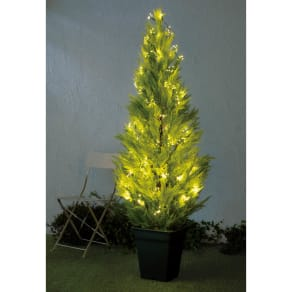 人工観葉植物ゴールドクレスト&LEDクラスターライトセット 人工観葉植物ゴールドクレスト1本180cm+ライト400球 写真