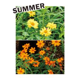 カナダ製ラバーエッジングシリーズ 1段 幅120cm おすすめのナチュラル植栽コーディネート:草丈があるヘリアンサスをメインに。暑さや乾燥に強いジニア、ペンタスなどもおすすめ。ホスタで瑞々しさを添えて。