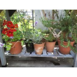 ハーブ用菜園プランター ベジトラグ 薄型(4コマ) 仕切り板はすべて取り外せるので、スペースが自由に使えます。