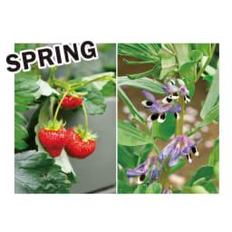 菜園プランター ベジトラグ バルコニーサイズ 季節別にベジトラグにおすすめの植物を紹介します。 ツル性のソラマメをトレリスに這わせ背景に。手前にイチゴ、隙間はレタスやチャイブで瑞々しく。