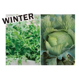 菜園プランター ベジトラグ バルコニーサイズ 季節別にベジトラグにおすすめの植物を紹介します。 ミズナやキャベツ、ミニハクサイ、ワサビナなど葉もの野菜が旬。葉色や形の違いで変化をつけて。
