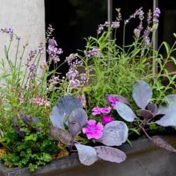 ディノスオリジナル培養土 バイオゴールド×吉谷桂子×dinos  バイオゴールドソイル 18L 寄せ植えの際にも。根張りが違います。