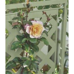 欧風トレリス付きプランターボックス〈セージグリーン〉 高さ100cm やさしいセージグリーン色が、花の色や形を際立たせます。