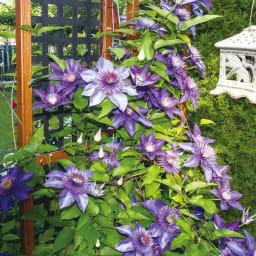 プランター台付きワイドトレリス ハイタイプ クレマチスやスイートピーなど、花のきれいなツル植物がおすすめ。