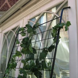 アイアングリーンカーテン トレリス つたが絡みやすい細いトレリス