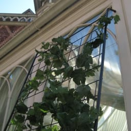 アイアングリーンカーテン トレリス 上部にはすべり止めのゴムキャップ付き。