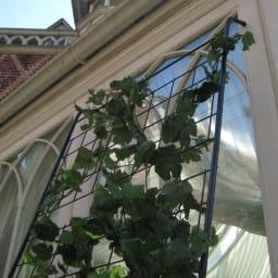 アイアングリーンカーテン トレリス お得な2枚組 上部にはすべり止めのゴムキャップ付き。