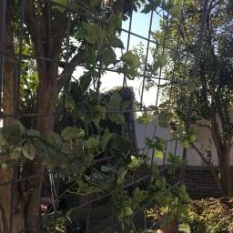 アイアングリーンカーテン〈奥行広々ハイタイプ〉 プランター台付き 内側から見てもグリーンたっぷりの風景に。