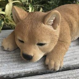 柴犬のオーナメントシリーズ ふせ子柴