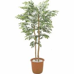 人工観葉植物シマトネリコ
