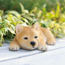柴犬のオーナメントシリーズ ふせ子柴 日なたぼっこでウトウト…。