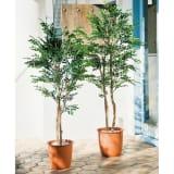 高さ150cm(人工観葉植物シマトネリコ) 写真