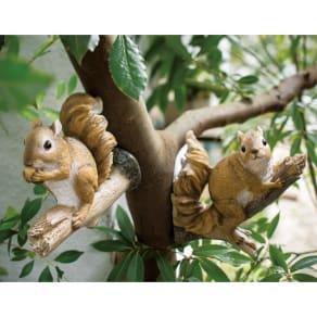 森の木のひっかけリス 2匹組 写真