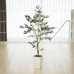 """CT触媒インテリアグリーン オリーブ 幹に本物の木を使用し、職人の手で葉ぶりを調節して1点1点手作りしています。より""""自然""""な仕上がりで、本物のグリーンと見まがう佇まい。"""