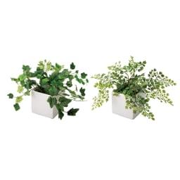 CT触媒加工グリーン2点セット CT触媒加工は光を必要とせず、空気に触れて消臭・抗菌効果を発揮しお部屋をリフレッシュする効果が期待できます。