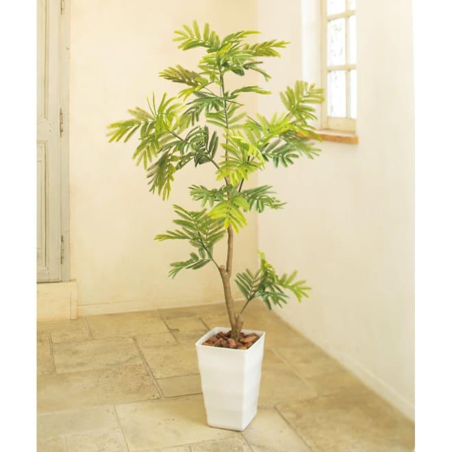 CT触媒加工インテリアグリーン エバーフレッシュ しなやかな樹形のエバーフレッシュ、葉姿が愛らしいボックスウッド、細葉のバーム。ほどよい高さは屋内でも圧迫感がなく、土がないので虫もつかず清潔です。