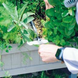 ハーブ用菜園プランター ベジトラグ 大型(8コマ) ミントは繁りすぎて交雑しやすいので仕切りは必須。