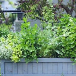 ハーブ用菜園プランター ベジトラグ 大型(8コマ) (イ)グレーウォッシュ 色見本。お届けは大型です。