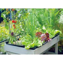 菜園プランター ベジトラグ バルコニーサイズ 吉谷桂子さんもご使用中。