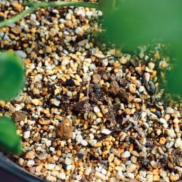 ディノスオリジナル培養土 バイオゴールド×吉谷桂子×dinos バイオゴールドローズソイル15L 生長に欠かせない有効菌のすみかとなる腐葉土やバラに合わせて贅沢にブレンドした元肥は最初の段階で十分な量を配合。日本の土壌では不足しがちなマグネシウムやケイ酸を追加。健康的な生育が期待できます。