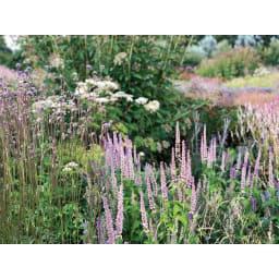 アンティーク風プランターカバー 2個組 グレージュ色に合う植栽アイデア グレージュに合わせたいのは大人色の花。紫色や、少しくすんだピンクやアプリコット、チョコレートコスモスやクリスマスローズのような色調に一層の雰囲気を与えてくれます。