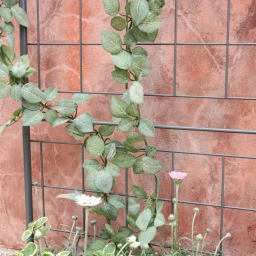 プランター台付きワイドトレリス ラウンドタイプ グレー 植物が絡みやすい格子柄です。