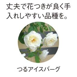 プランター台付きローズトレリス グレー1枚 丈夫で花つきが良く手入れしやすい品種を。 つるアイスバーグ