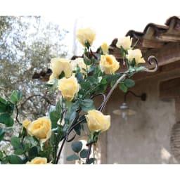 ハーフアーチ 1個 アーチ部分までバラがのびたら、とってもゴージャス!