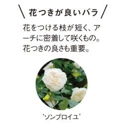 アイアン ローズシリーズ ローズアーチ(バラ用ガーデニングアーチ)