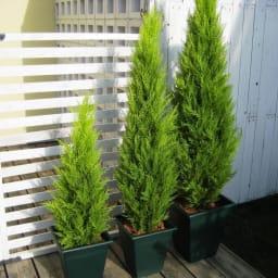 高さ90cm(人工観葉植物ゴールドクレスト) ※お届けの鉢のデザインは若干異なります。
