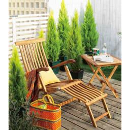 高さ150cm(人工観葉植物ゴールドクレスト) サイズを違うものをランダムに置いても素敵。