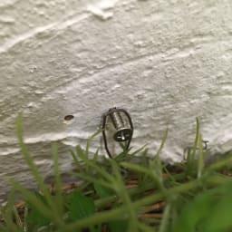 玄関におすすめ!インテリアグリーンのリース グリーンプランツ
