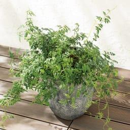 スパイラルサポート5本組 倒れたり広がる植物をしっかりサポート。ベランダで植物を育てるときにも。