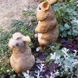 リアルほっぺウサギ 3匹組