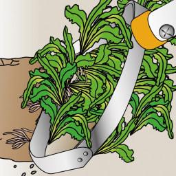 立ったまま作業できるからラク! 雑草取り 刃の角度で使い分けて やわらかい雑草は土と一緒にはぎ取り。