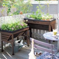 50周年オリジナルカラー菜園プランター ベジトラグ S