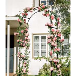 ビッグアーチ 高さも幅もたっぷりビッグサイズ!バラをからませてアプローチにゴージャスな演出を。