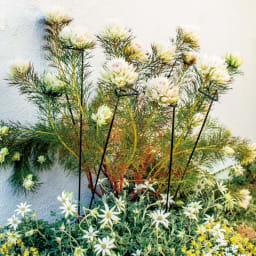 プランツサポートロング7本組 お日さまに向かって高く伸びる植物もしっかり支えてすくすく育てられるロングタイプ。