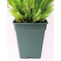 人工観葉植物ゴールドクレスト 180cm お得な2本組 お届けの商品は、こちらの鉢を使用しています。