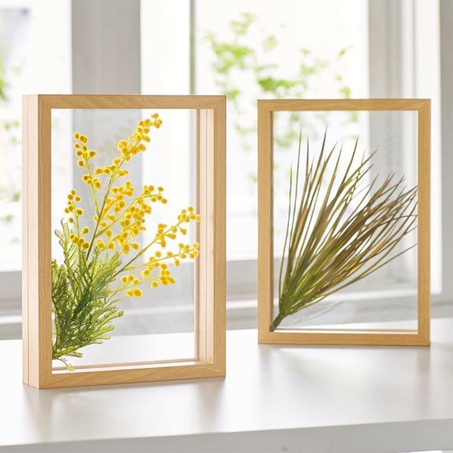 立体グリーンガラスフレーム 左から(ア)ミモザ、(イ)グラスリーフ まるで標本のようなグリーンアートが楽しめるフレーム。光を通すので窓辺に飾っても素敵。中のインテリアグリーンは取り外しができ、お好きなアレンジが楽しめます。