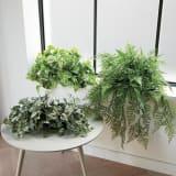 CT触媒加工シェルフプランツ [人工観葉植物・インテリアグリーン] 写真