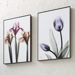 X-RAY/エックスレイ アートフレーム 左からアイリス、チューリップ お部屋のアクセントに映えるスタイリッシュなアートフレーム。レントゲン撮影された花々の繊細で神秘的な質感が、モダンな空間を演出します。