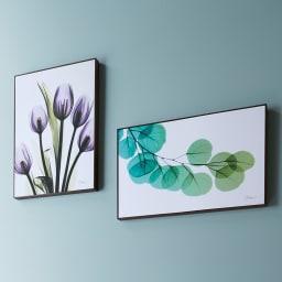 X-RAY/エックスレイ アートフレーム 左からNEWチューリップ、ユーカリ お部屋のアクセントに映えるスタイリッシュなアートフレーム。レントゲン撮影された花々の繊細で神秘的な質感が、モダンな空間を演出します。